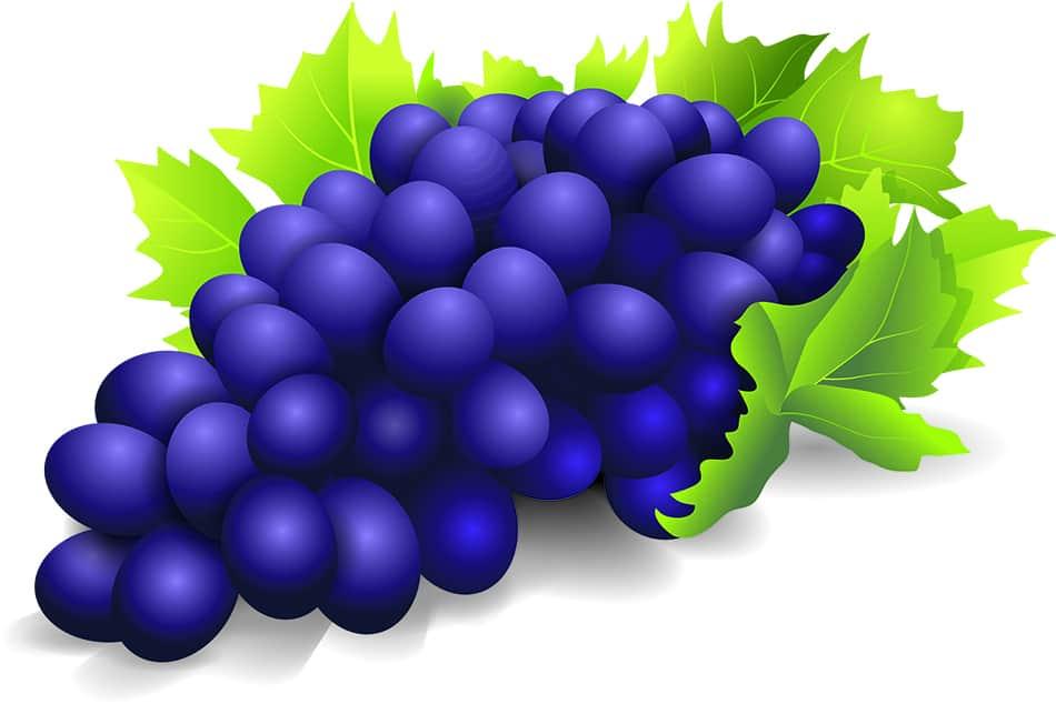 Grape Dream Symbolism