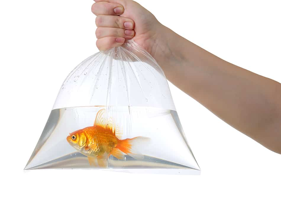Dream about a goldfish in a plastic bag