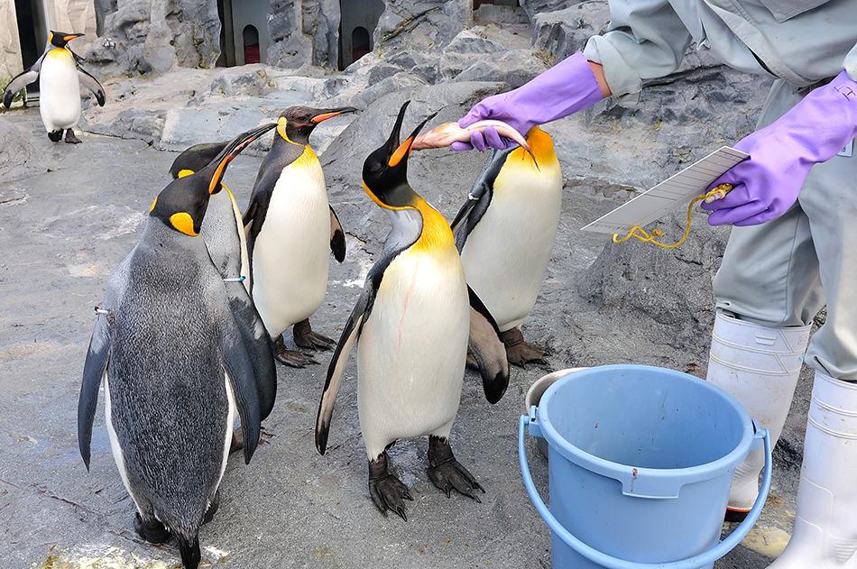 Dream of feeding a penguin