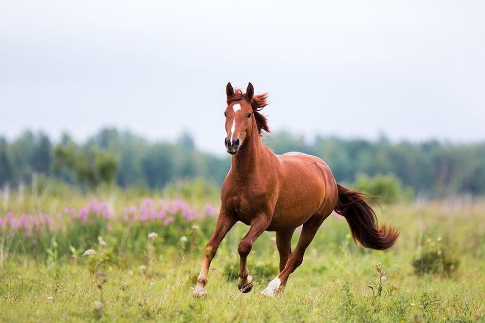 Dreaming of running horses