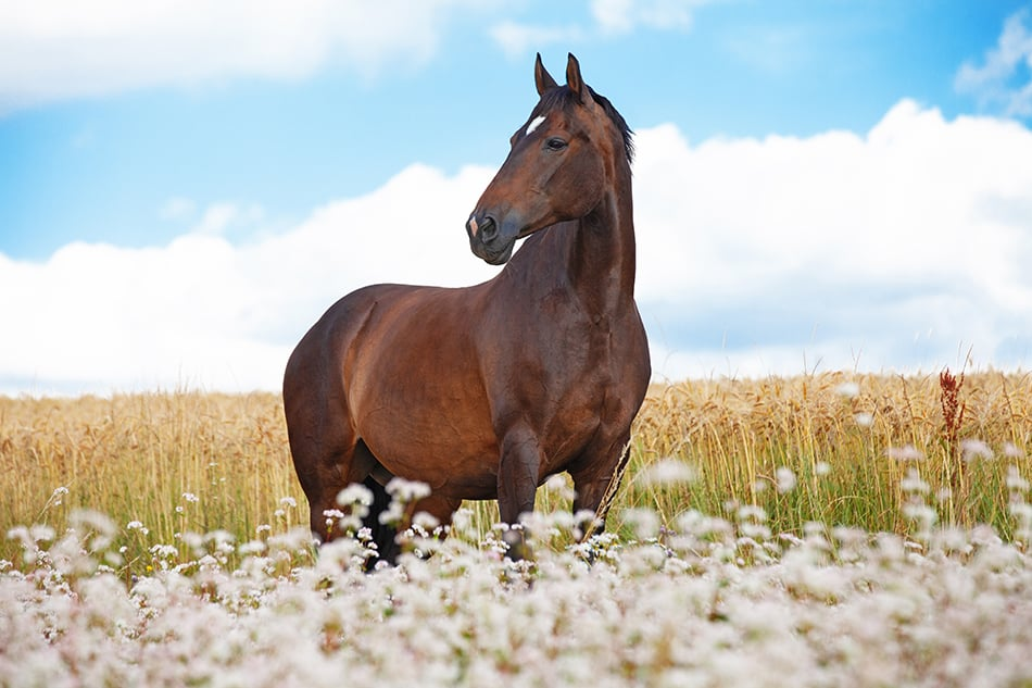 Dreaming of seeing a brown horse