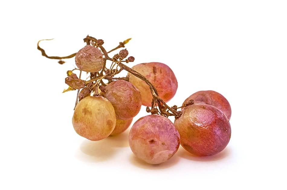 Dream of spoiled grapes