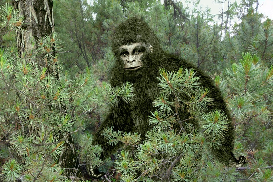 Dream that you saw Bigfoot