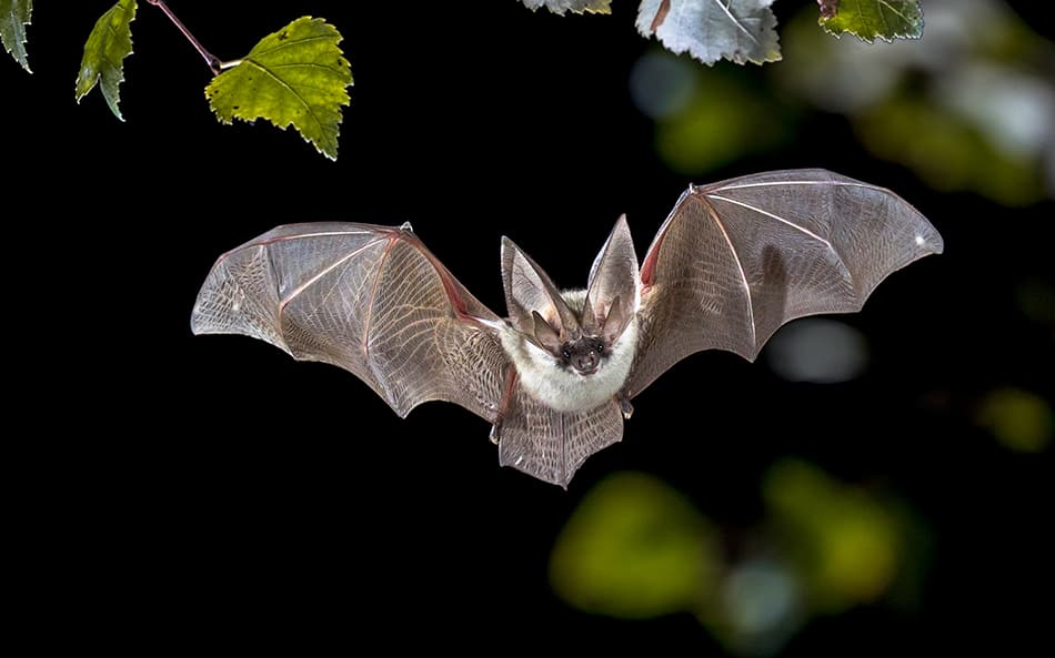 What Does It Mean to Dream of a Bat?