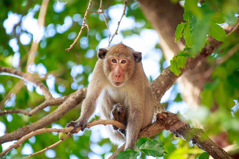 What Does It Mean to Dream of a Monkey?