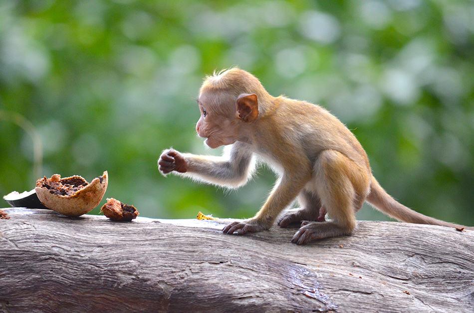 Dream of a baby monkey