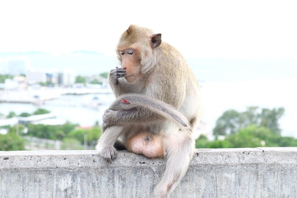 Dream of an injured monkey