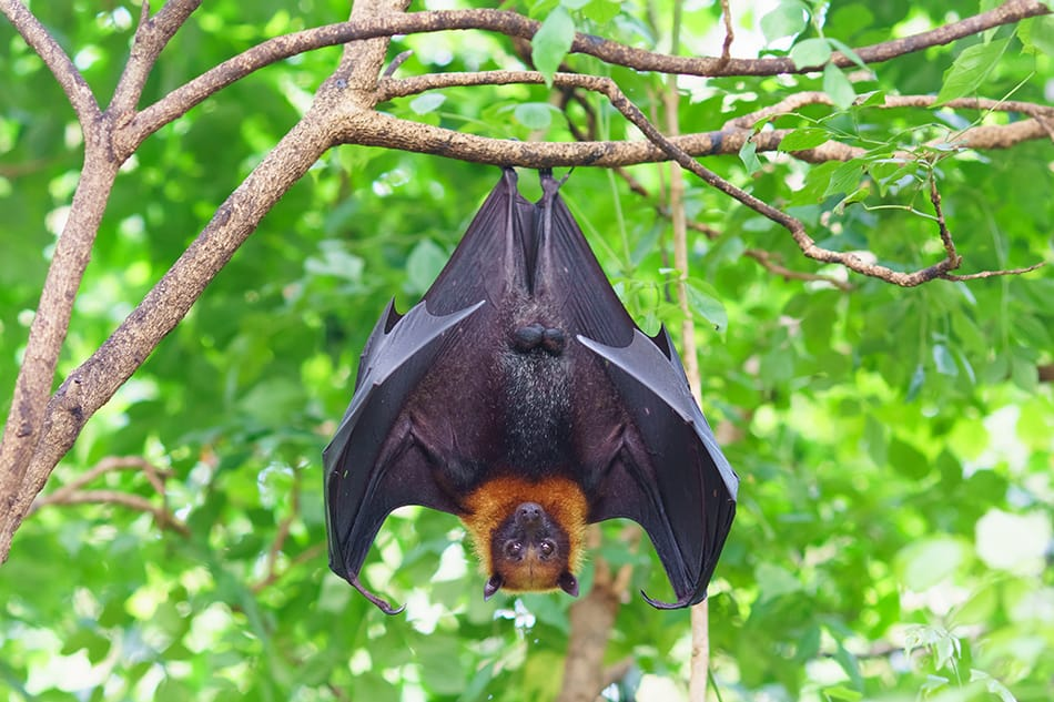Dream of bats hanging upside down