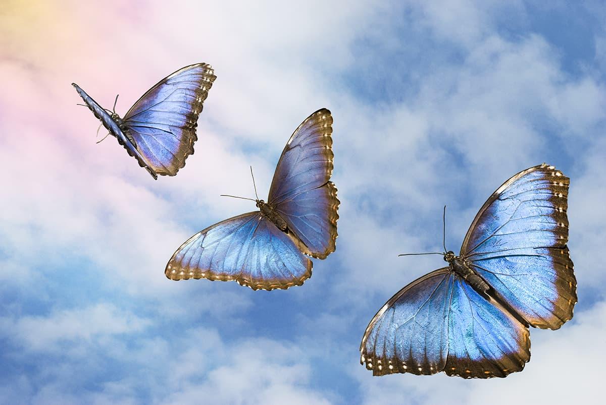 Butterflies fly and flutter