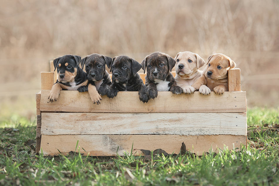 Dream of a litter of puppies