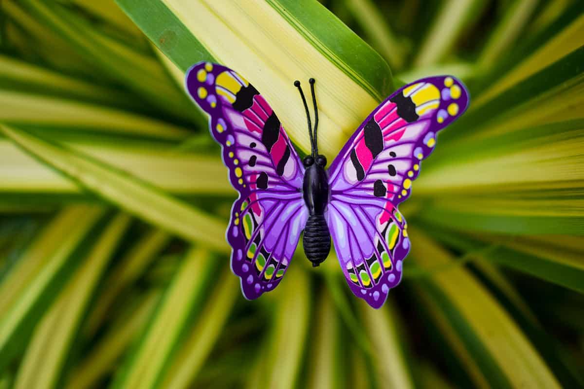 Dream of a Purple Butterfly