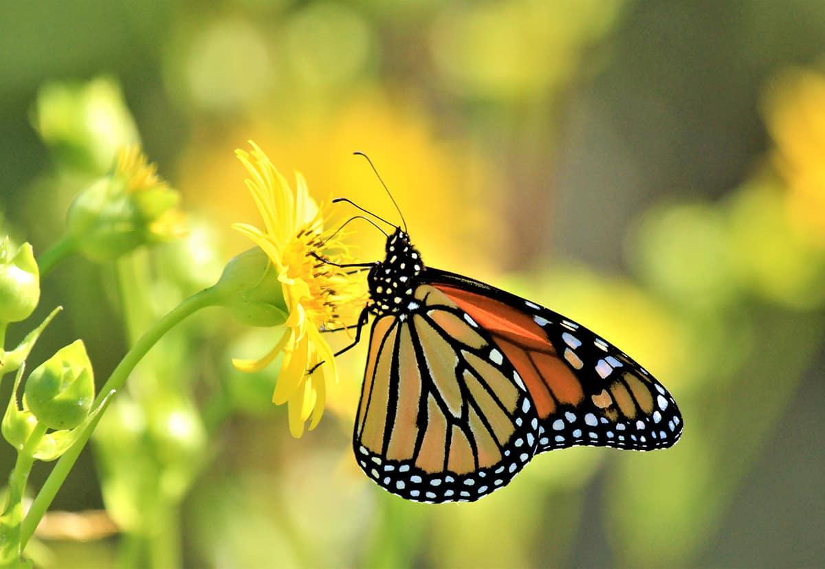 Dream of an Orange Butterfly