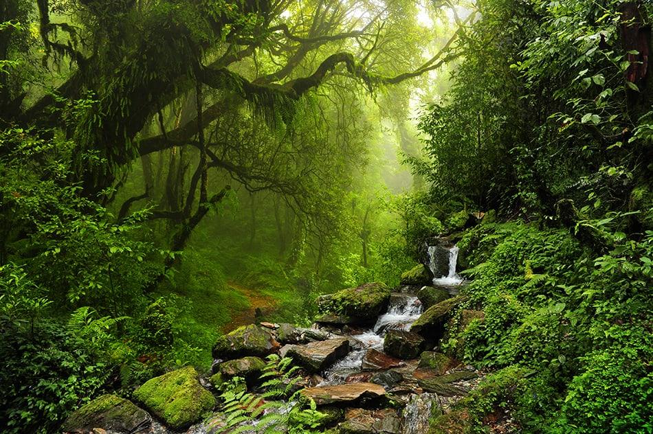 Dream of a rainforest