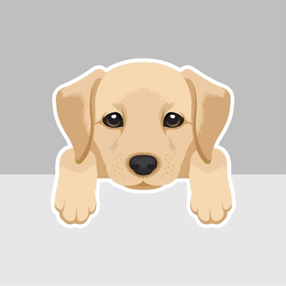 Puppy Dream Symbolism