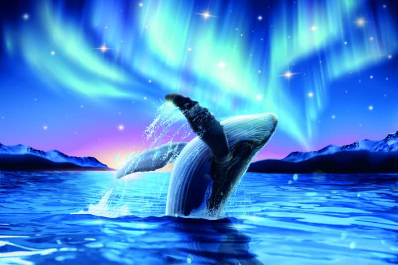 Whale Dream Meaning
