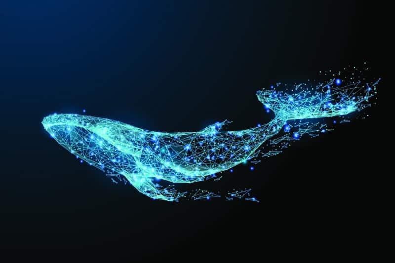 Whale Dream Symbolism